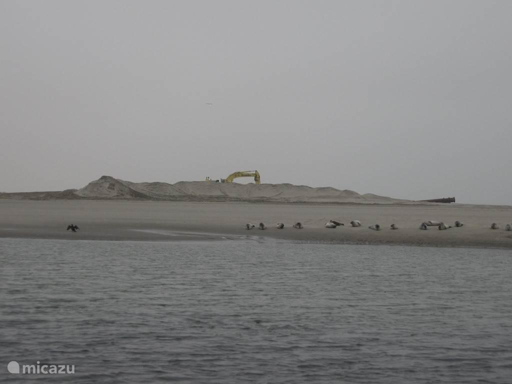 Nieuw strand en nieuwe gasten